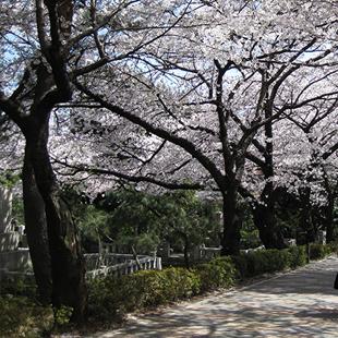 青山霊園のご案内イメージ